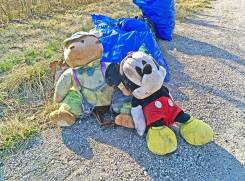 Mickey Mouse reunited with his bear friend. You just never know what you'll find out there.